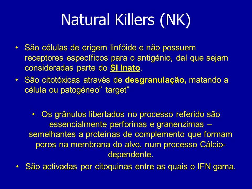 Natural Killers (NK) São células de origem linfóide e não possuem receptores específicos para o antigénio, daí que sejam consideradas parte do SI Inat