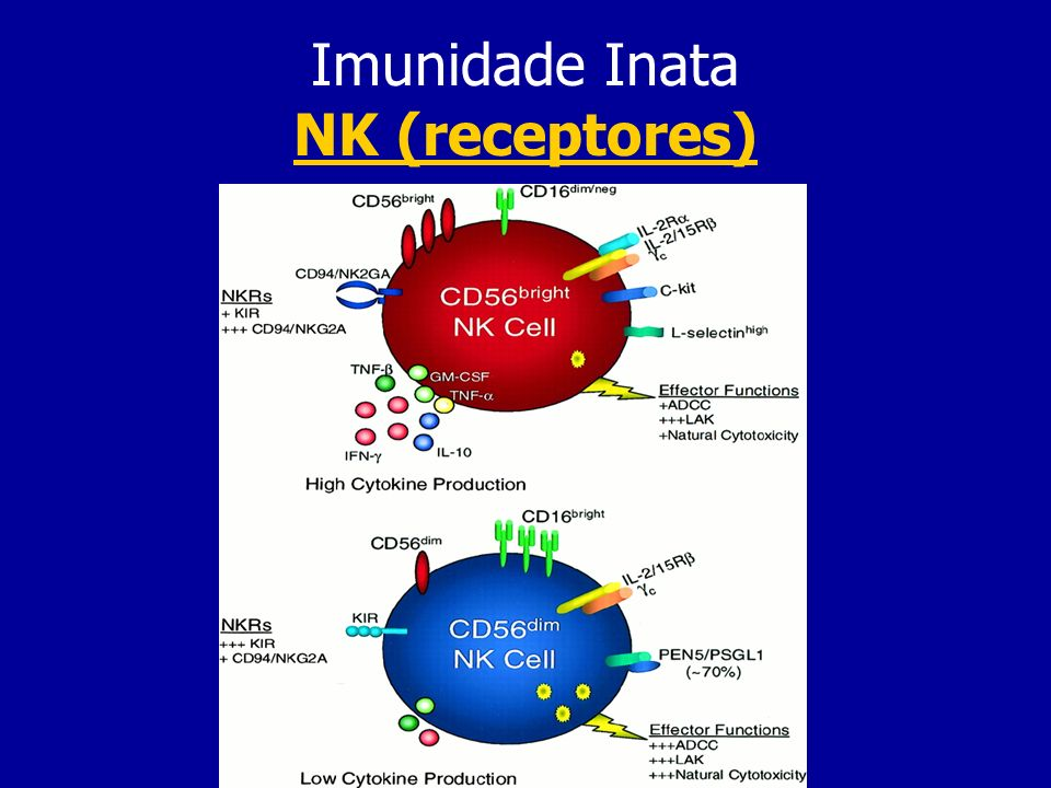 Imunidade Inata NK (receptores)