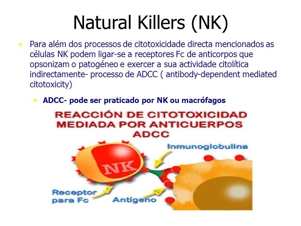 Natural Killers (NK) Para além dos processos de citotoxicidade directa mencionados as células NK podem ligar-se a receptores Fc de anticorpos que opso
