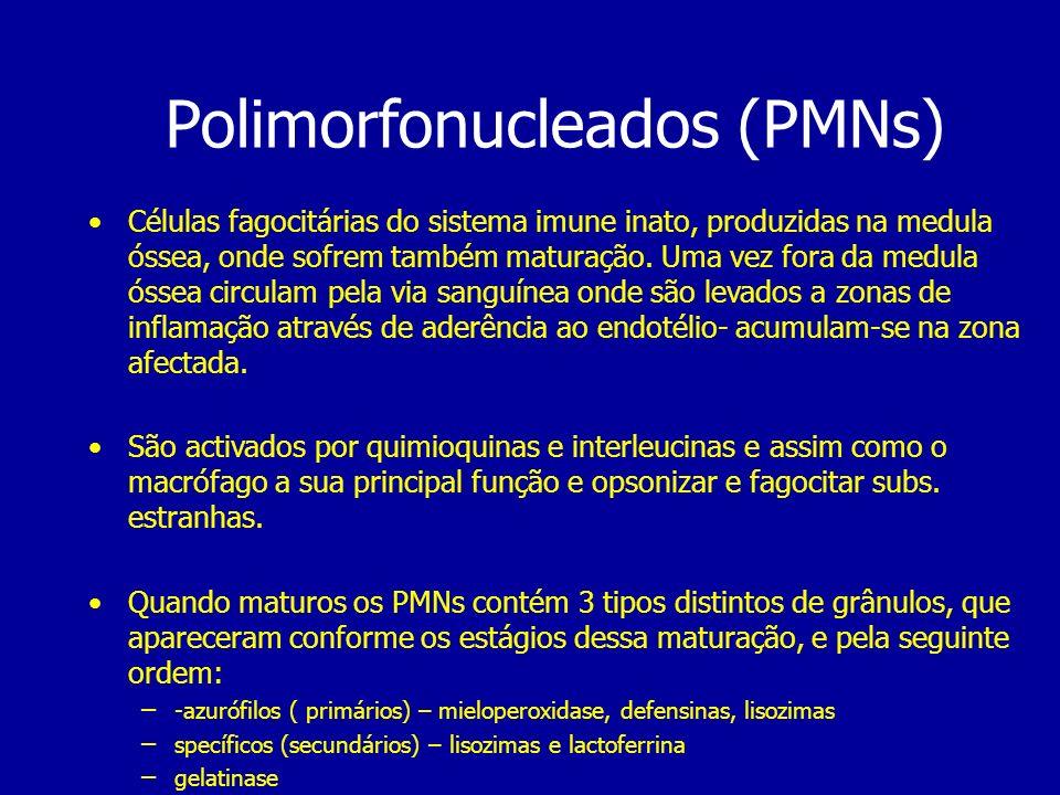 Polimorfonucleados (PMNs) Células fagocitárias do sistema imune inato, produzidas na medula óssea, onde sofrem também maturação. Uma vez fora da medul
