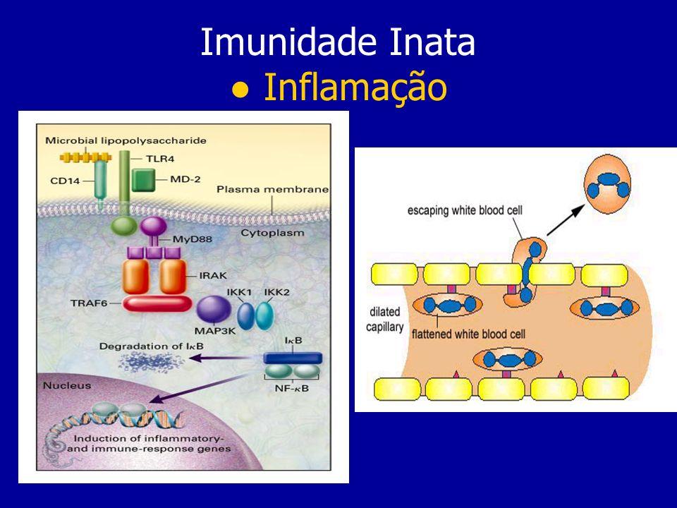 Imunidade Inata Inflamação