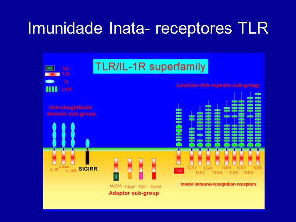 Macrófagos Uma vez activado, o Macrófago secreta vários factores como interleucinas (IL-1, IL-6, TNF e IFN), proteinas de complemento e mediadores inflamatórios (NAP,PGE,ICAM ) Todos estes levam ao aumento do fluxo sanguíneo e alterações do tecido vascular O patogéneo pode: 1-Evadir-se à fagocitose (libertar toxinas – Streptococcus, possuir uma cápsula que evita o contacto-B.anthracis, ou evitar a opsonização- Staphylococci) 2- Evadir-se à morte pós- fagocitose ( escapar do fagossoma para o citoplasma e replicar-se, inibir a fusão fago-lisossomica ou inibir mesmo as enzimas líticas através de antioxidantes