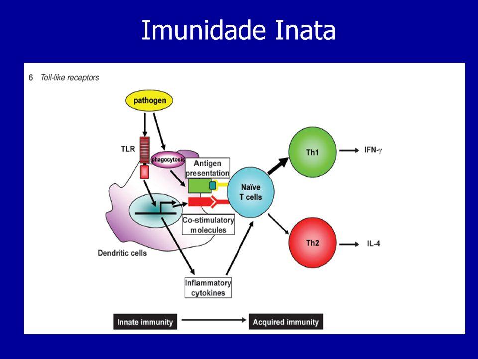 Polimorfonucleados (PMNs) Células fagocitárias do sistema imune inato, produzidas na medula óssea, onde sofrem também maturação.