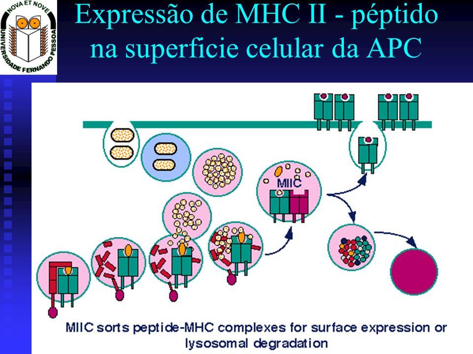 Expressão de MHC II - péptido na superficie celular da APC