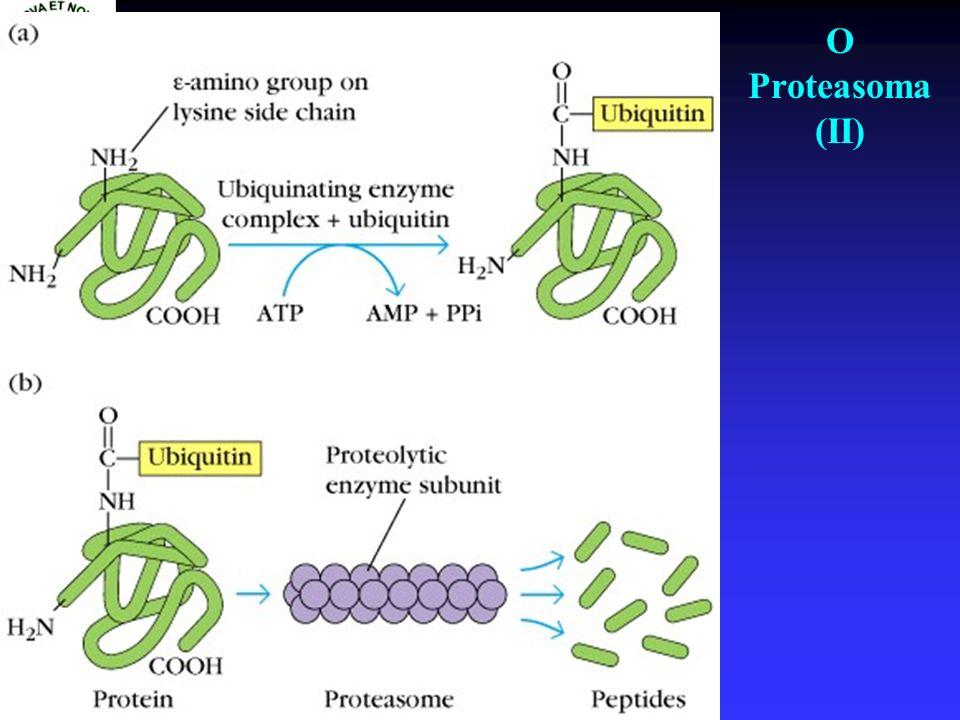 O Proteasoma (II)