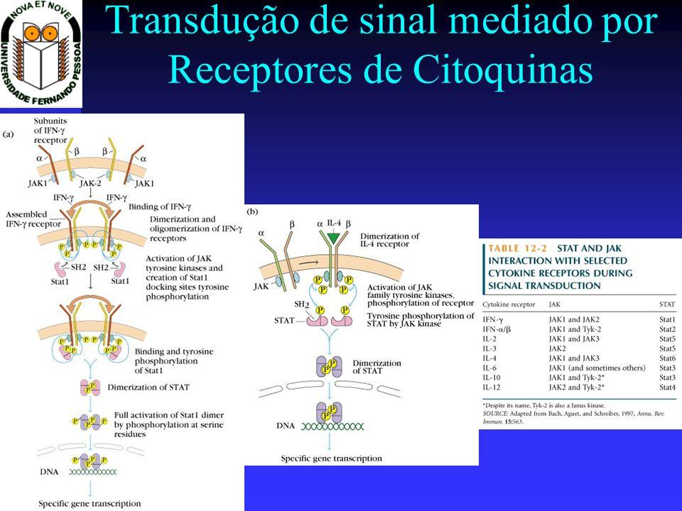 Transdução de sinal mediado por Receptores de Citoquinas