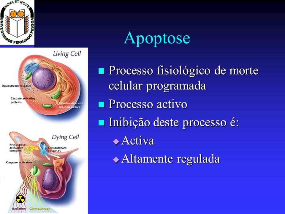 Apoptose Processo fisiológico de morte celular programada Processo fisiológico de morte celular programada Processo activo Processo activo Inibição de