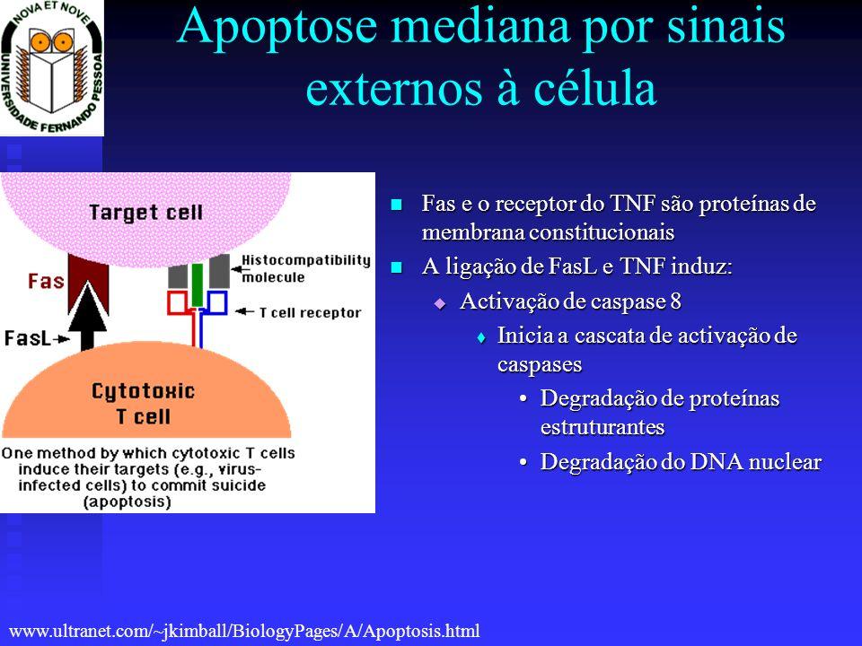 Apoptose mediana por sinais externos à célula Fas e o receptor do TNF são proteínas de membrana constitucionais Fas e o receptor do TNF são proteínas