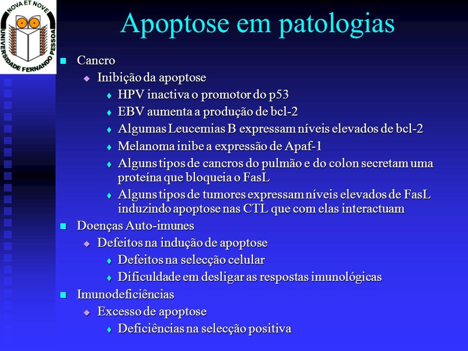 Apoptose em patologias Cancro Cancro Inibição da apoptose Inibição da apoptose HPV inactiva o promotor do p53 HPV inactiva o promotor do p53 EBV aumen