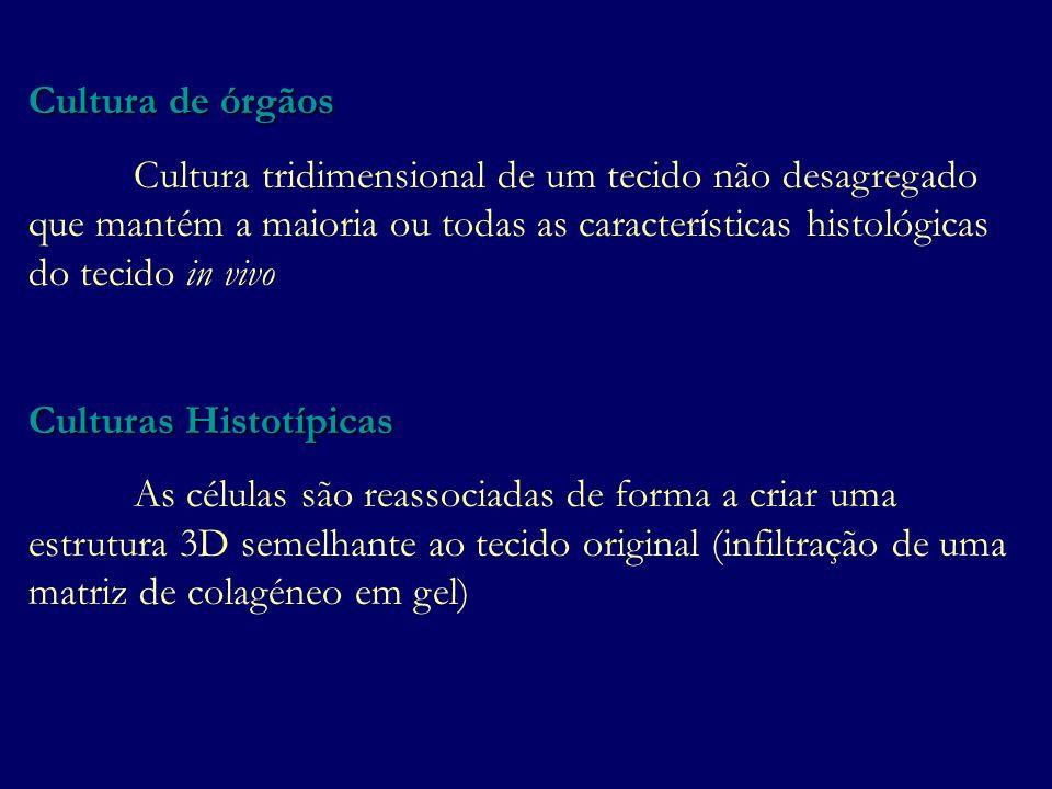 Cultura de órgãos Cultura tridimensional de um tecido não desagregado que mantém a maioria ou todas as características histológicas do tecido in vivo