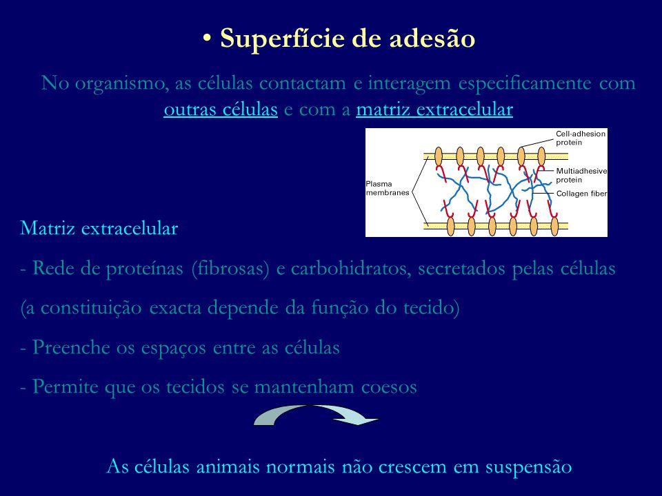 Superfície de adesão No organismo, as células contactam e interagem especificamente com outras células e com a matriz extracelular Matriz extracelular