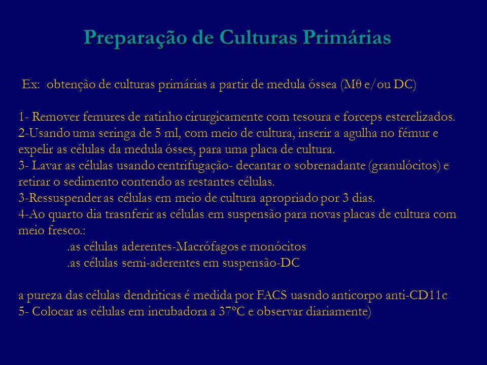 Preparação de Culturas Primárias Ex: obtenção de culturas primárias a partir de medula óssea (Mθ e/ou DC) 1- Remover femures de ratinho cirurgicamente