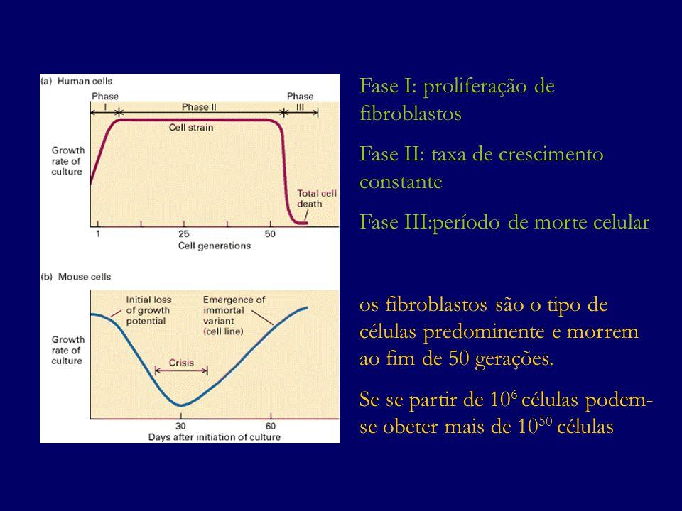 Fase I: proliferação de fibroblastos Fase II: taxa de crescimento constante Fase III:período de morte celular os fibroblastos são o tipo de células pr