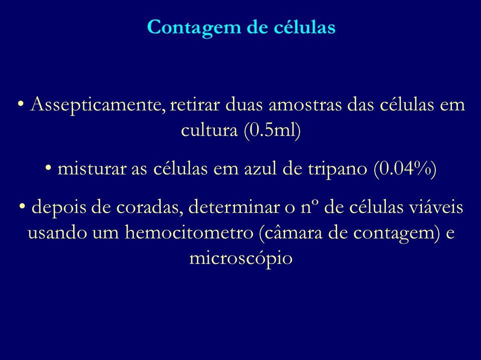 Contagem de células Assepticamente, retirar duas amostras das células em cultura (0.5ml) misturar as células em azul de tripano (0.04%) depois de cora