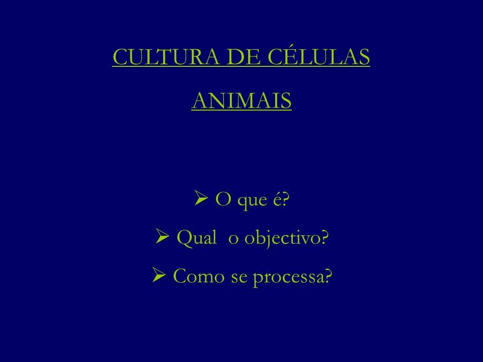CULTURA DE CÉLULAS ANIMAIS O que é? Qual o objectivo? Como se processa?