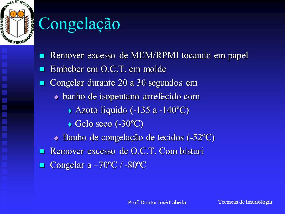 Técnicas de Imunologia Prof. Doutor José Cabeda Congelação Remover excesso de MEM/RPMI tocando em papel Remover excesso de MEM/RPMI tocando em papel E