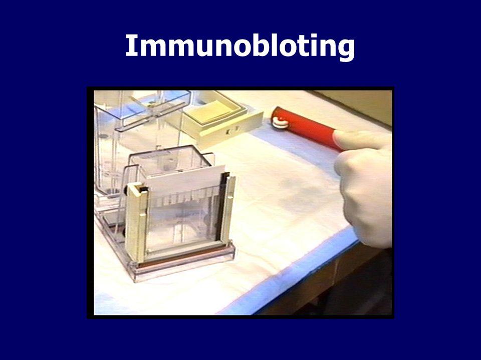 Immunobloting