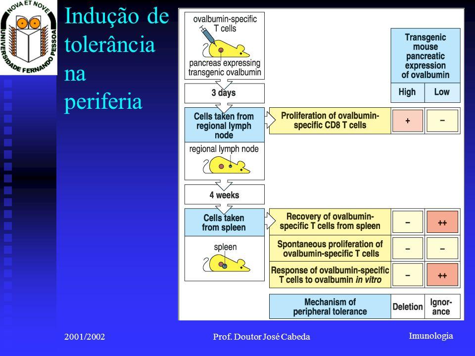Imunologia 2001/2002Prof. Doutor José Cabeda Indução de tolerância na periferia