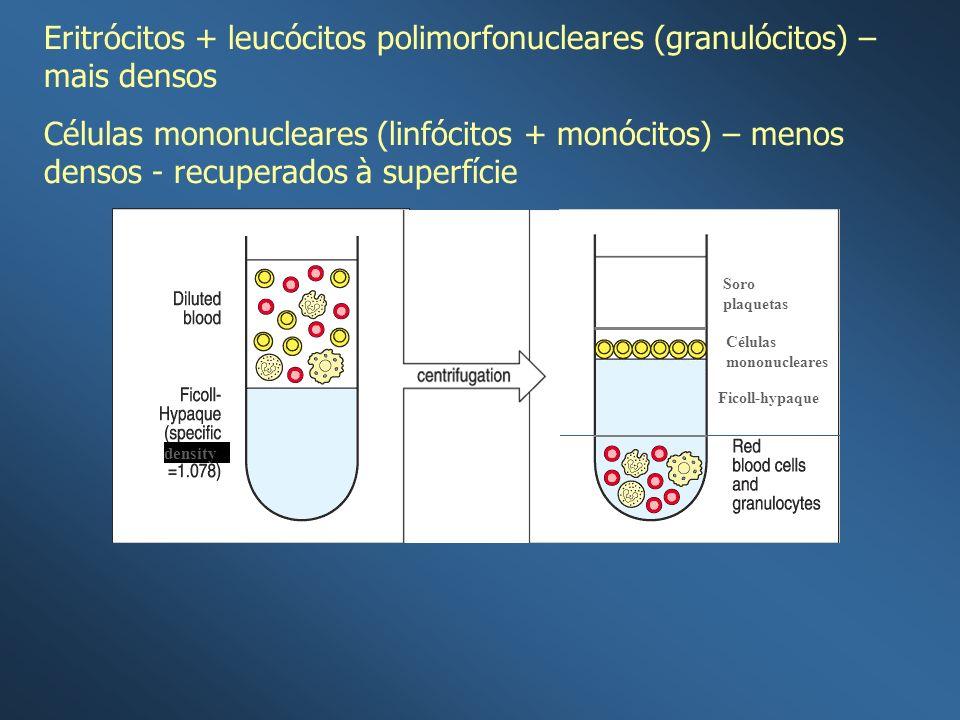 density Ficoll-hypaque Células mononucleares Soro plaquetas Eritrócitos + leucócitos polimorfonucleares (granulócitos) – mais densos Células mononucle