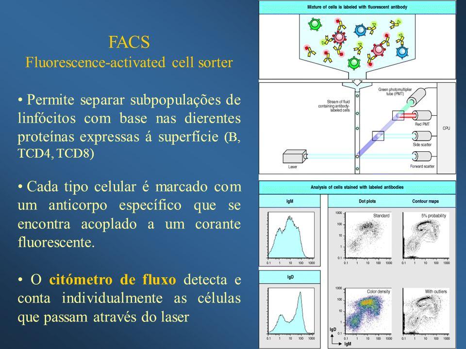 FACS Fluorescence-activated cell sorter Permite separar subpopulações de linfócitos com base nas dierentes proteínas expressas á superfície (B, TCD4,