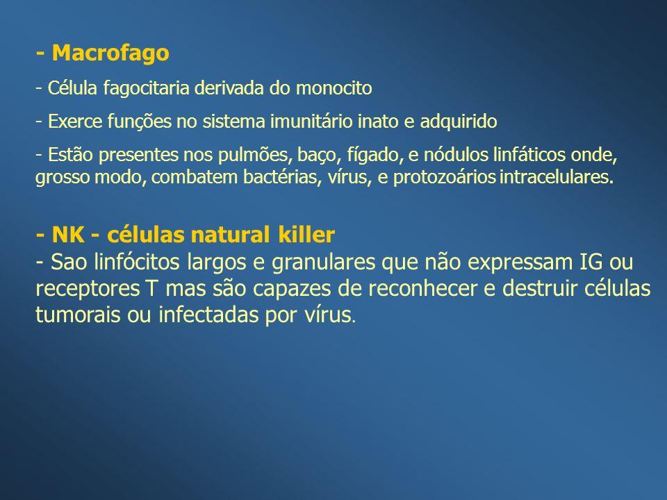- Macrofago - Célula fagocitaria derivada do monocito - Exerce funções no sistema imunitário inato e adquirido - Estão presentes nos pulmões, baço, fí