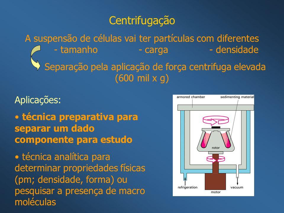 Centrifugação A suspensão de células vai ter partículas com diferentes - tamanho - carga - densidade Separação pela aplicação de força centrifuga elev