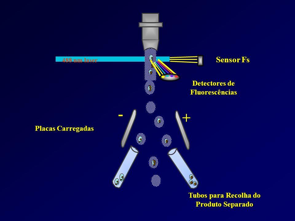 FACS Fluorescence-activated cell sorter Permite separar subpopulações de linfócitos com base nas diferentes proteínas expressas á superfície (B, TCD4,