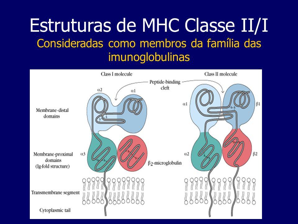 Estruturas de MHC Classe II/I Consideradas como membros da família das imunoglobulinas