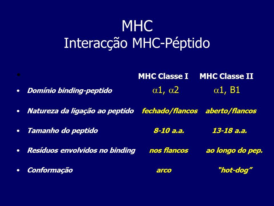 MHC Classe I MHC Classe II Domínio binding-peptido 1, 2 1, B1 Natureza da ligação ao peptido fechado/flancos aberto/flancos Tamanho do peptido 8-10 a.