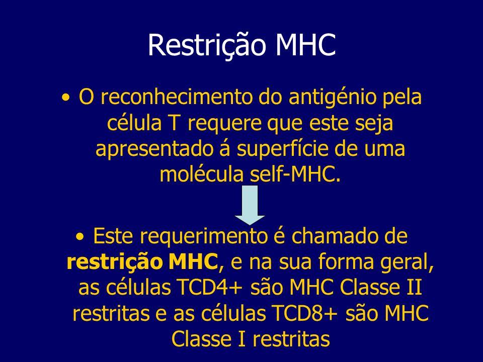 Restrição MHC O reconhecimento do antigénio pela célula T requere que este seja apresentado á superfície de uma molécula self-MHC. Este requerimento é