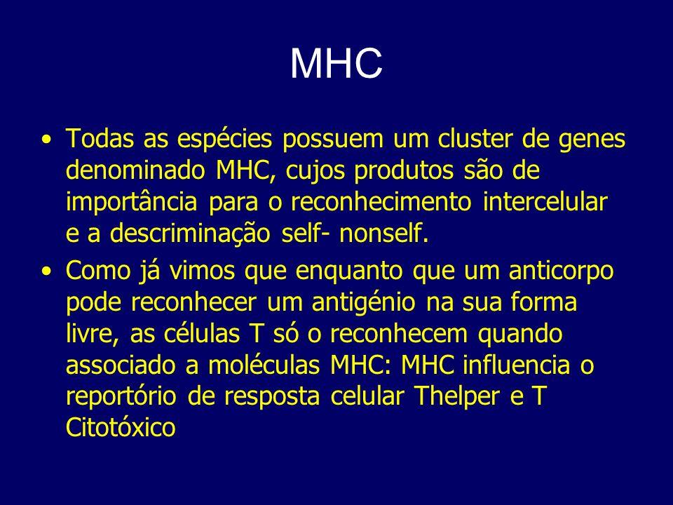 MHC Todas as espécies possuem um cluster de genes denominado MHC, cujos produtos são de importância para o reconhecimento intercelular e a descriminaç