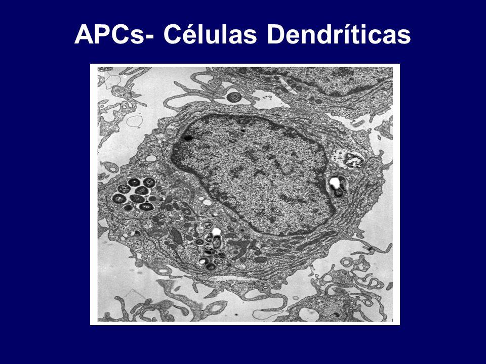 APCs- Células Dendríticas