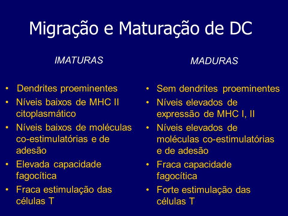 Migração e Maturação de DC IMATURAS Dendrites proeminentes Níveis baixos de MHC II citoplasmático Níveis baixos de moléculas co-estimulatórias e de ad