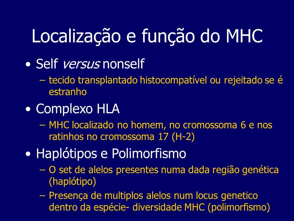 Localização e função do MHC Self versus nonself –tecido transplantado histocompatível ou rejeitado se é estranho Complexo HLA –MHC localizado no homem