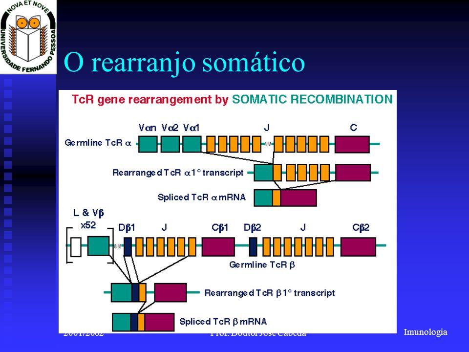 Imunologia 2001/2002Prof. Doutor José Cabeda O rearranjo somático
