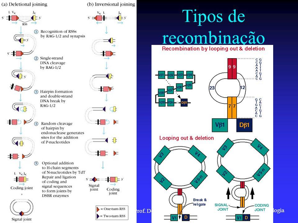 Imunologia 2001/2002Prof. Doutor José Cabeda Tipos de recombinação