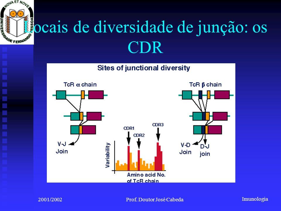 Imunologia 2001/2002Prof. Doutor José Cabeda Locais de diversidade de junção: os CDR