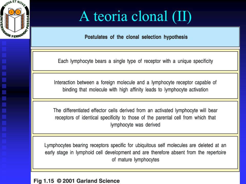 Imunologia 2001/2002Prof. Doutor José Cabeda A teoria clonal (II)