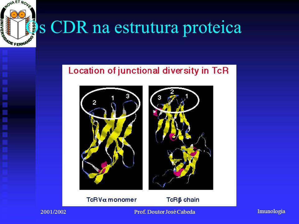Imunologia 2001/2002Prof. Doutor José Cabeda Os CDR na estrutura proteica