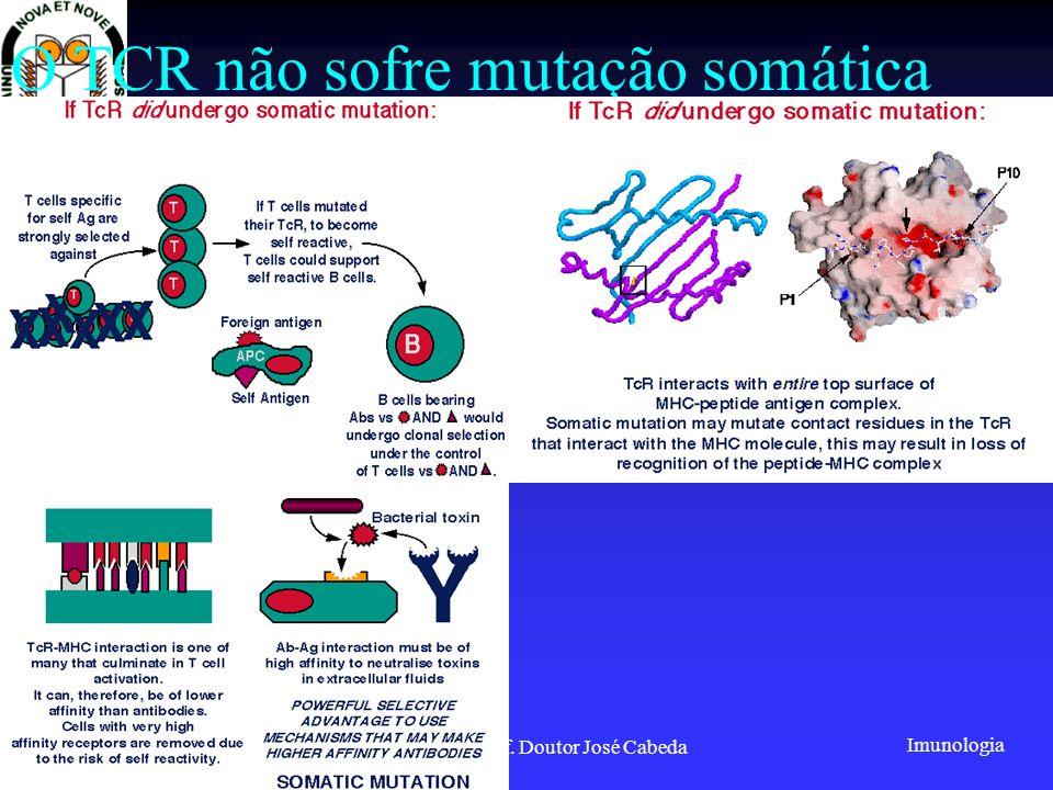 Imunologia 2001/2002Prof. Doutor José Cabeda O TCR não sofre mutação somática