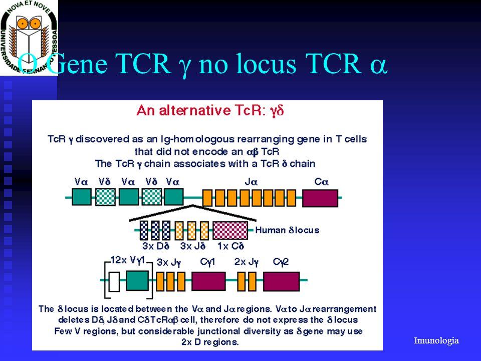Imunologia 2001/2002Prof. Doutor José Cabeda O Gene TCR no locus TCR