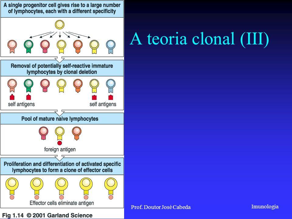 Imunologia 2001/2002Prof. Doutor José Cabeda A teoria clonal (III)