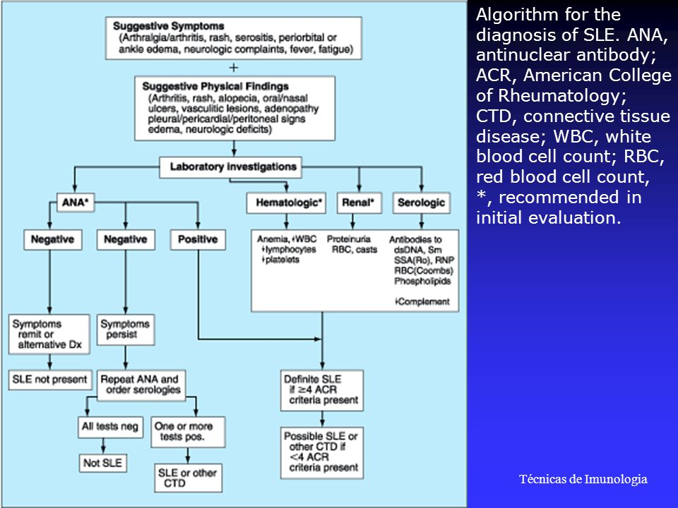 Técnicas de Imunologia Prof. Doutor José Cabeda Algorithm for the diagnosis of SLE. ANA, antinuclear antibody; ACR, American College of Rheumatology;