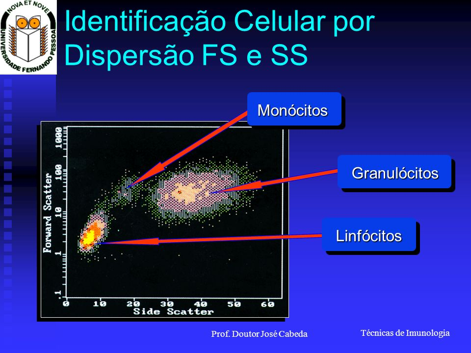 Técnicas de Imunologia Prof. Doutor José Cabeda Identificação Celular por Dispersão FS e SS Granulócitos Linfócitos Monócitos