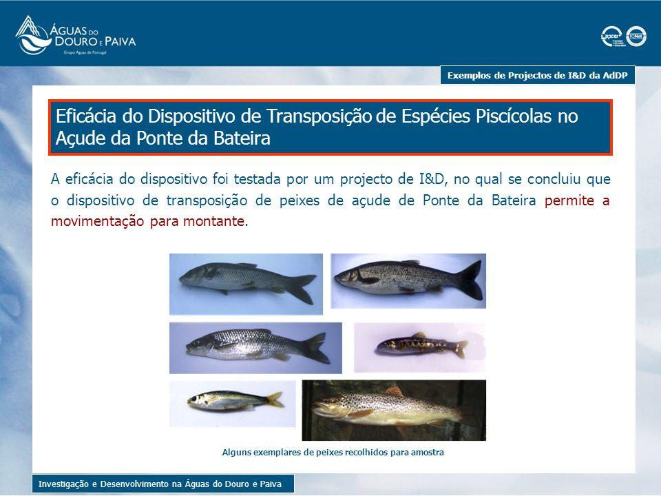 Estudo da Hidrodinâmica no Tanque de Ozonização da ETA de Lever Investigação e Desenvolvimento na Águas do Douro e Paiva Exemplos de Projectos de I&D da AdDP