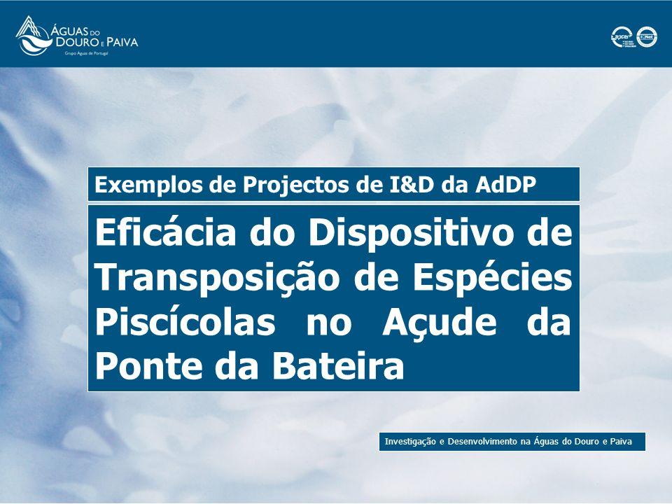 Investigação e Desenvolvimento na Águas do Douro e Paiva Escada de Peixes do Açude da Ponte da Bateira O açude da Ponte da Bateira, no rio Paiva, entrou em funcionamento em 1999.