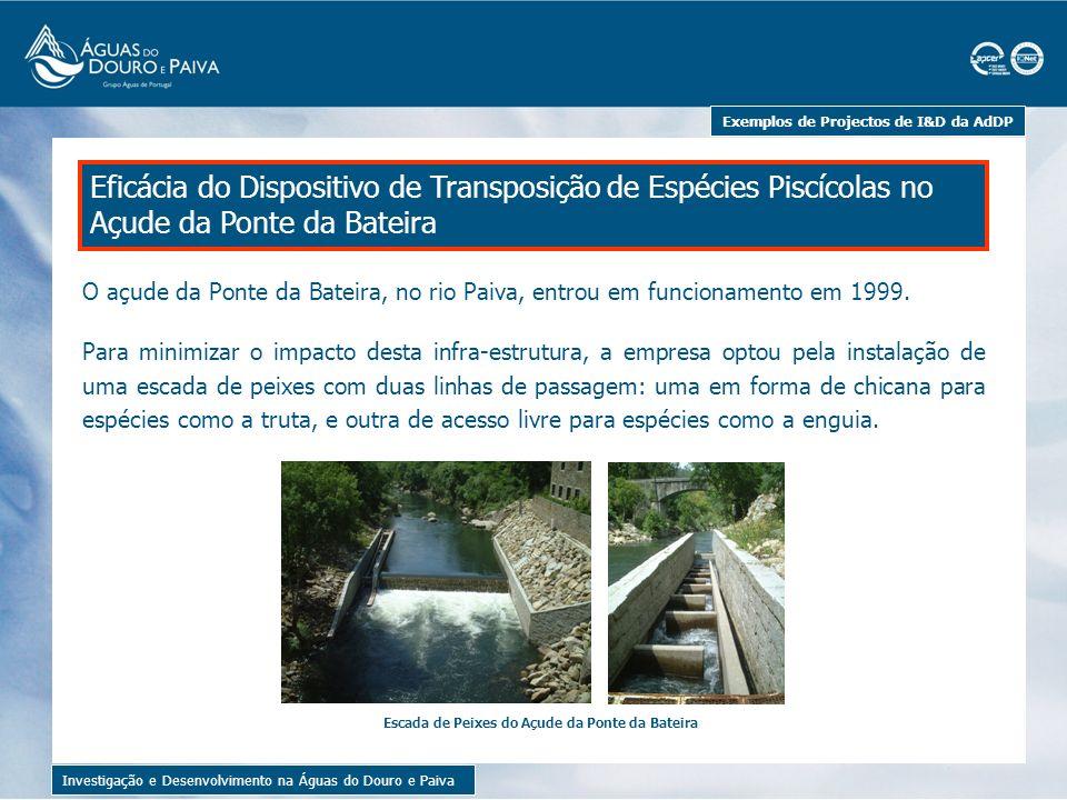 Exemplos de Projectos de I&D da AdDP Investigação e Desenvolvimento na Águas do Douro e Paiva Alguns exemplares de peixes recolhidos para amostra A eficácia do dispositivo foi testada por um projecto de I&D, no qual se concluiu que o dispositivo de transposição de peixes de açude de Ponte da Bateira permite a movimentação para montante.