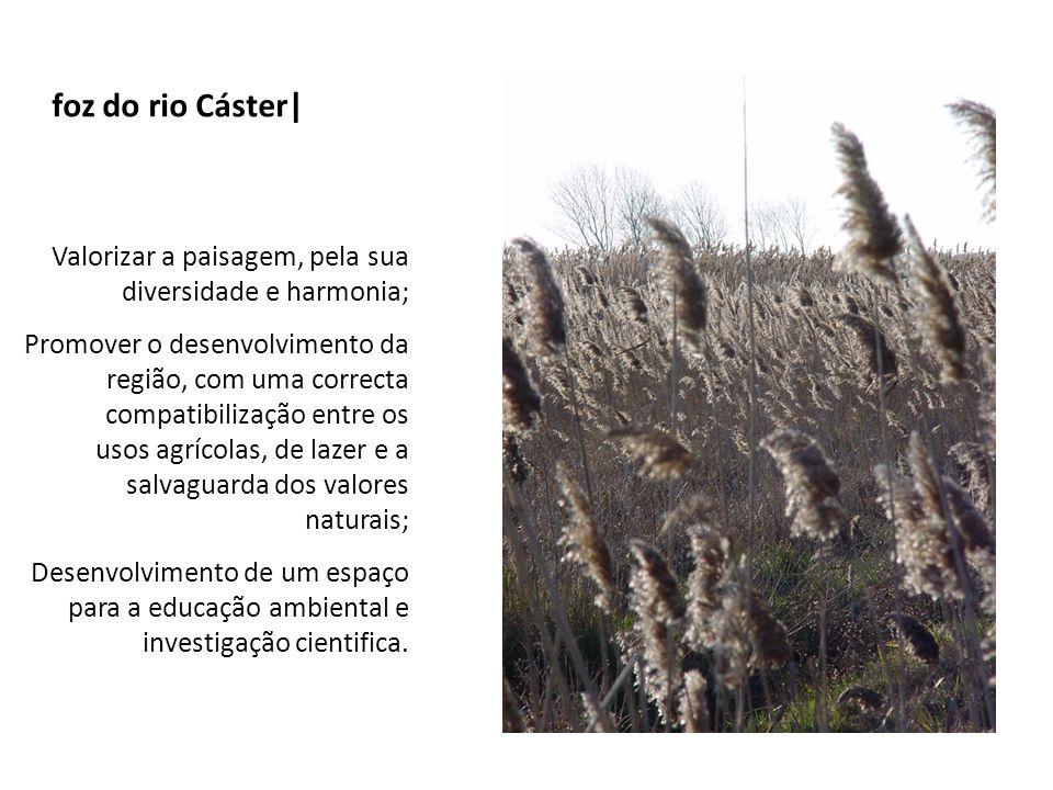 Ria de Aveiro | Esta é uma das zonas húmidas mais importantes do país.