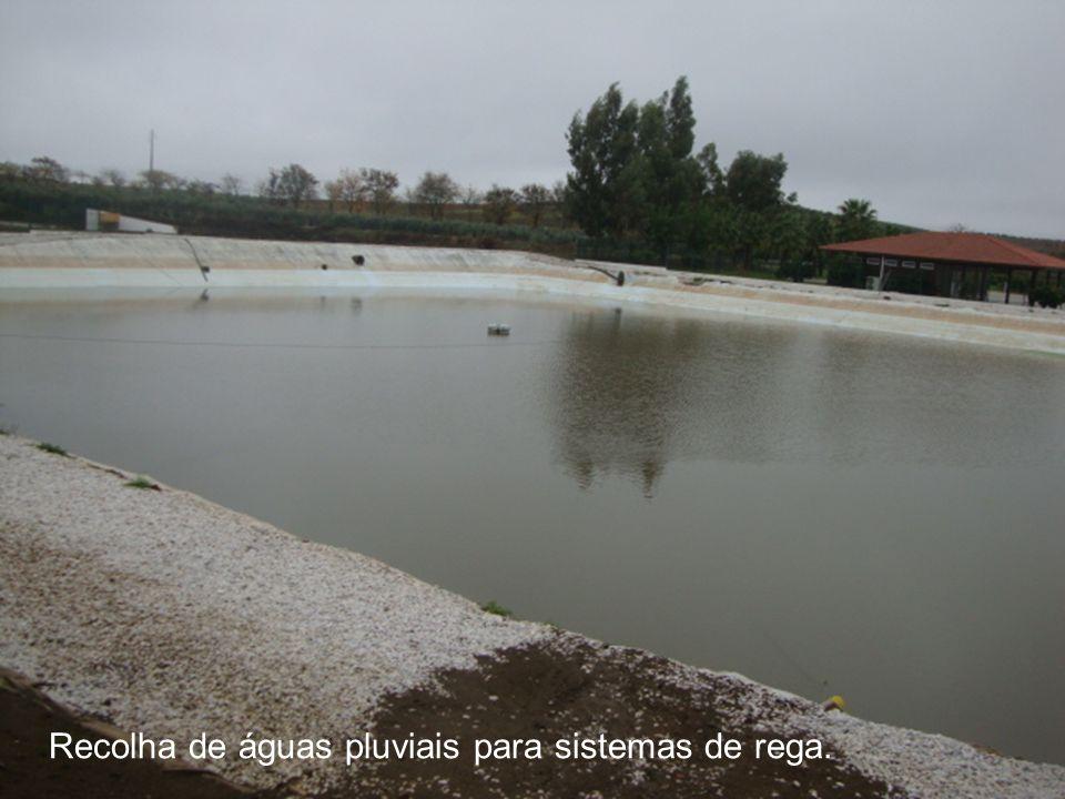 Recolha de águas pluviais para sistemas de rega.