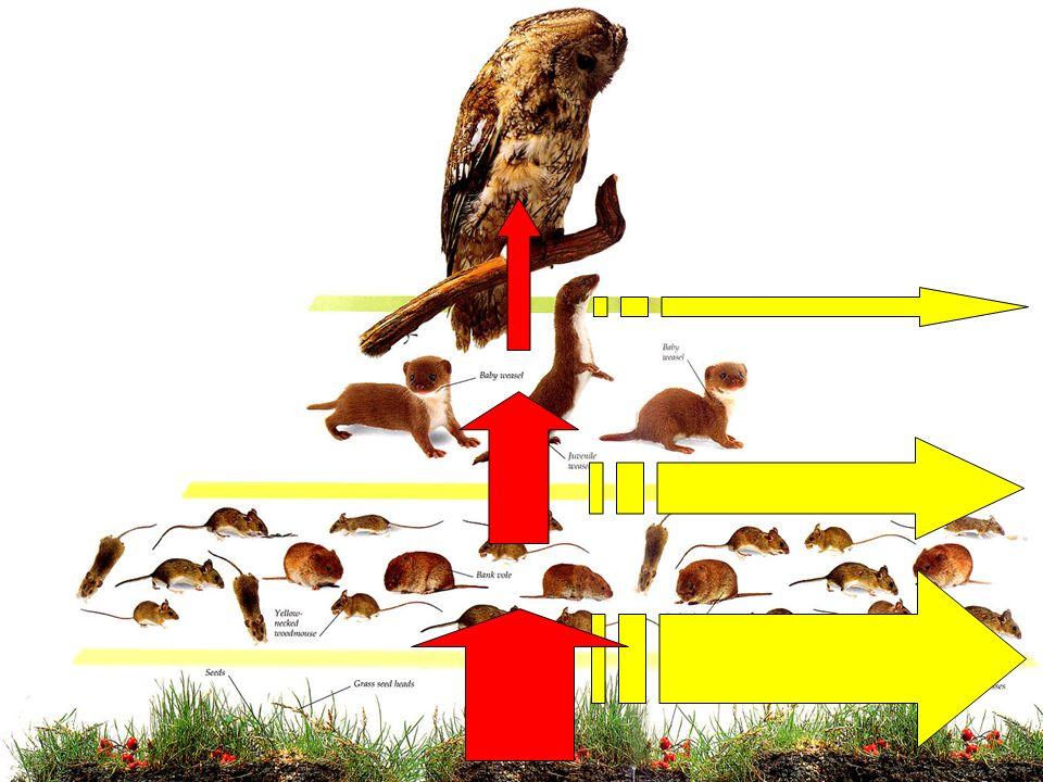 Sistema adaptativo complexo 1.O sistema não está em equilíbrio 2.Interações localizadas 3.Ausência de um controle top-down bem definido 4.Estruturado como uma rede 5.Adaptação 6.Capacidade de evoluir Módulo I F016: Física aplicada à Ecologia